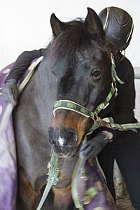 Ponnyfokus har snälla ponnyer