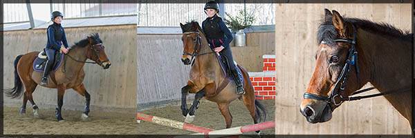 Ponnyfokusponny Sangria